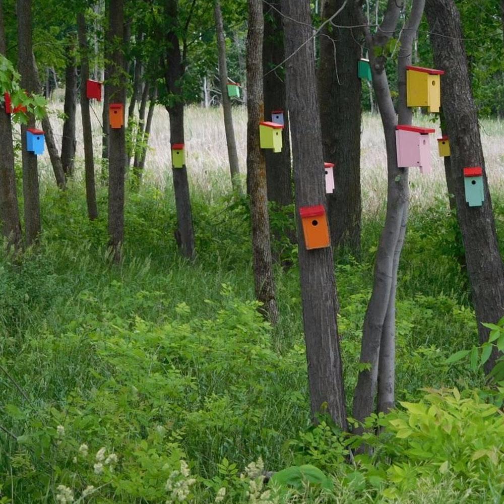 Madárház erdő